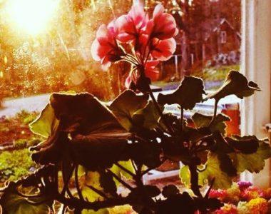 Feb-23-Floral-Finesse-crop.jpg